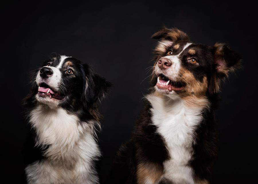 Отпугиватель собак: какой выбрать и на что обратить внимание