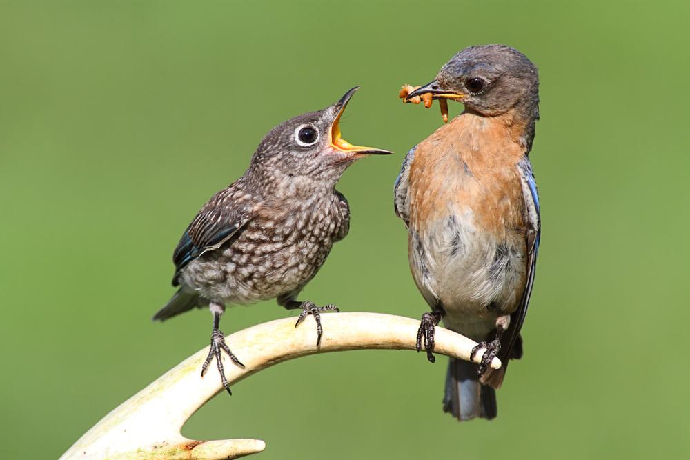 Как уберечь урожай от птиц?