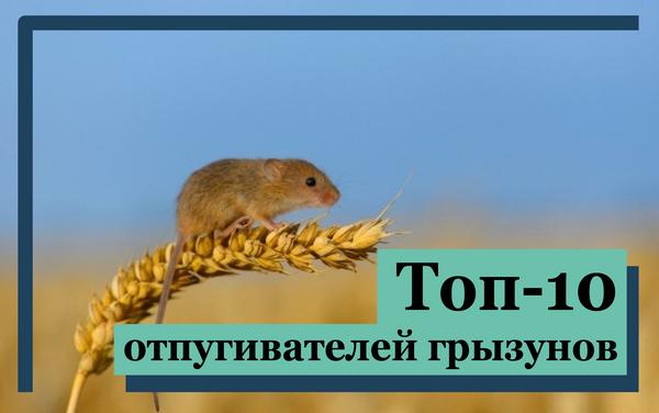Топ-10 самых эффективных отпугивателей мышей и крыс